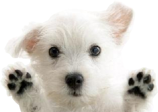 puppy-img-02